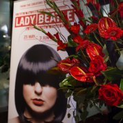 Lady Beatle