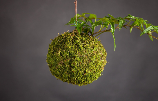 Kokedama workshop at Biome