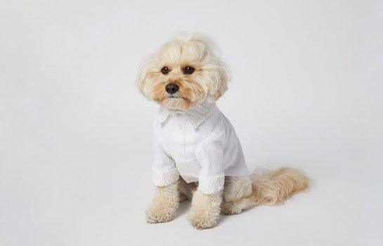 Primp your pooch with custom bridal dog wear from Sebastian Says