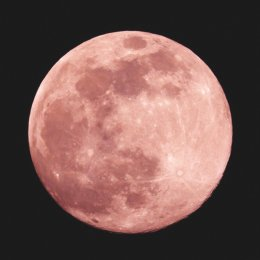 Pretty in pink – a strawberry moon is set to light up the sky early tomorrow morning