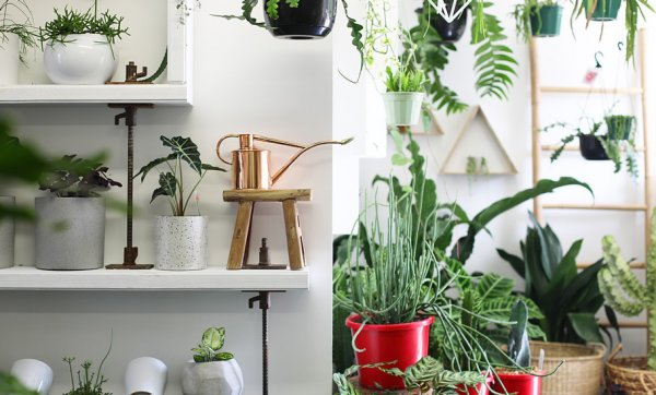 Greenfolk brings plants, homewares and botanical vibes to Burleigh