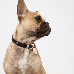 Dapper doggos – Mimco to launch a series of leather dog collars
