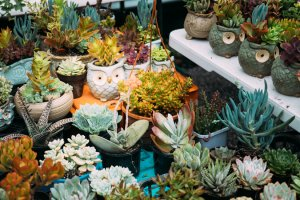 Succulent Bowl Making Workshop at Mo's Desert Clubhouse