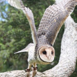 Be captivated by Currumbin Wildlife Sanctuary's soaring new show Wild Skies