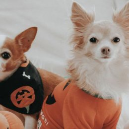 Big W has dropped a super-cute Halloween petwear range for your spooky doggo